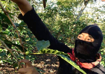 Caffè Durito: our zapatista coffee